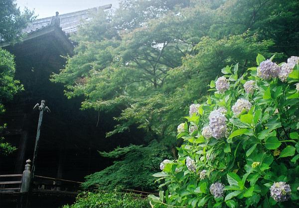 Myohonji